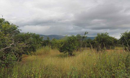Ações de recuperação de área degradada realizadas pela Funceme proporcionam melhoria na qualidade de vida em comunidade de Jaguaribe